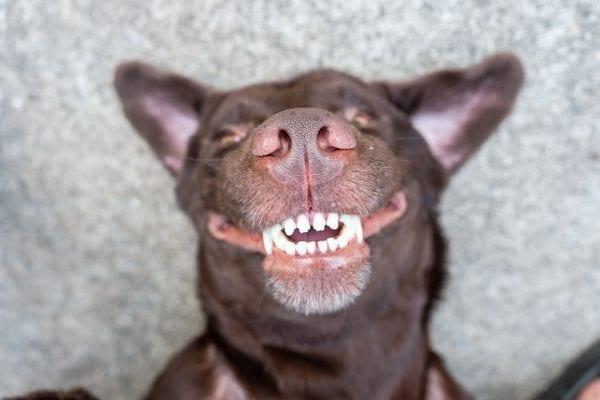 Healthy breath & teeth in dogs