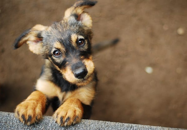 Is your dog healthy?  Here are 8 clues