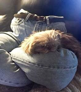 Jeans Dog Bed