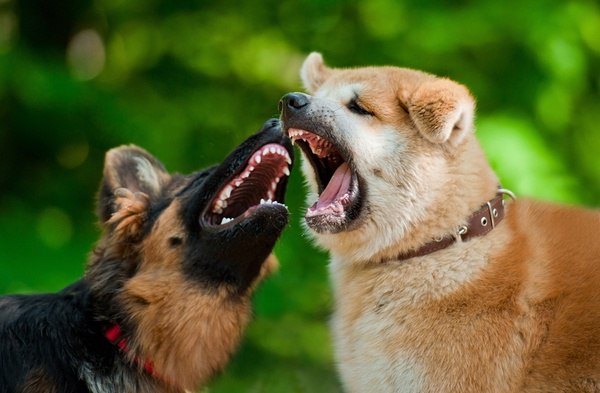What to do if a dog fight starts?