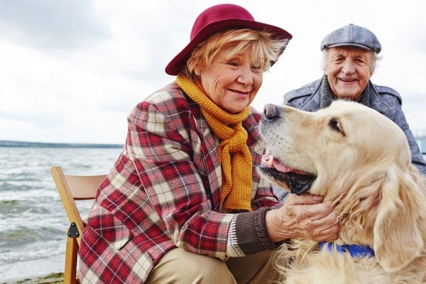 Socializing your dog with people and animals of all shapes and sizes