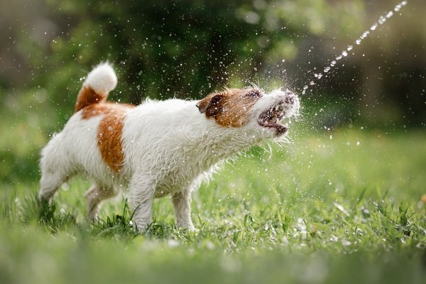 Using water to stop a dog fight