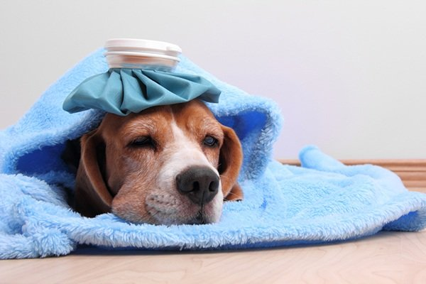 Can you get sick if you co-sleep with your dog?