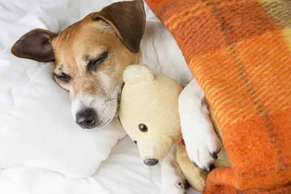 Health pros and cons of co-sleeping with your dog
