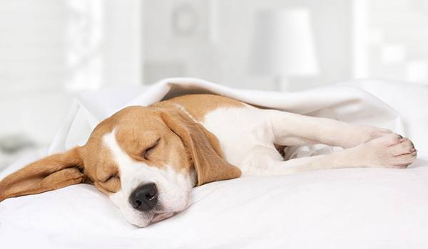 Pros and cons of sleeping with a dog