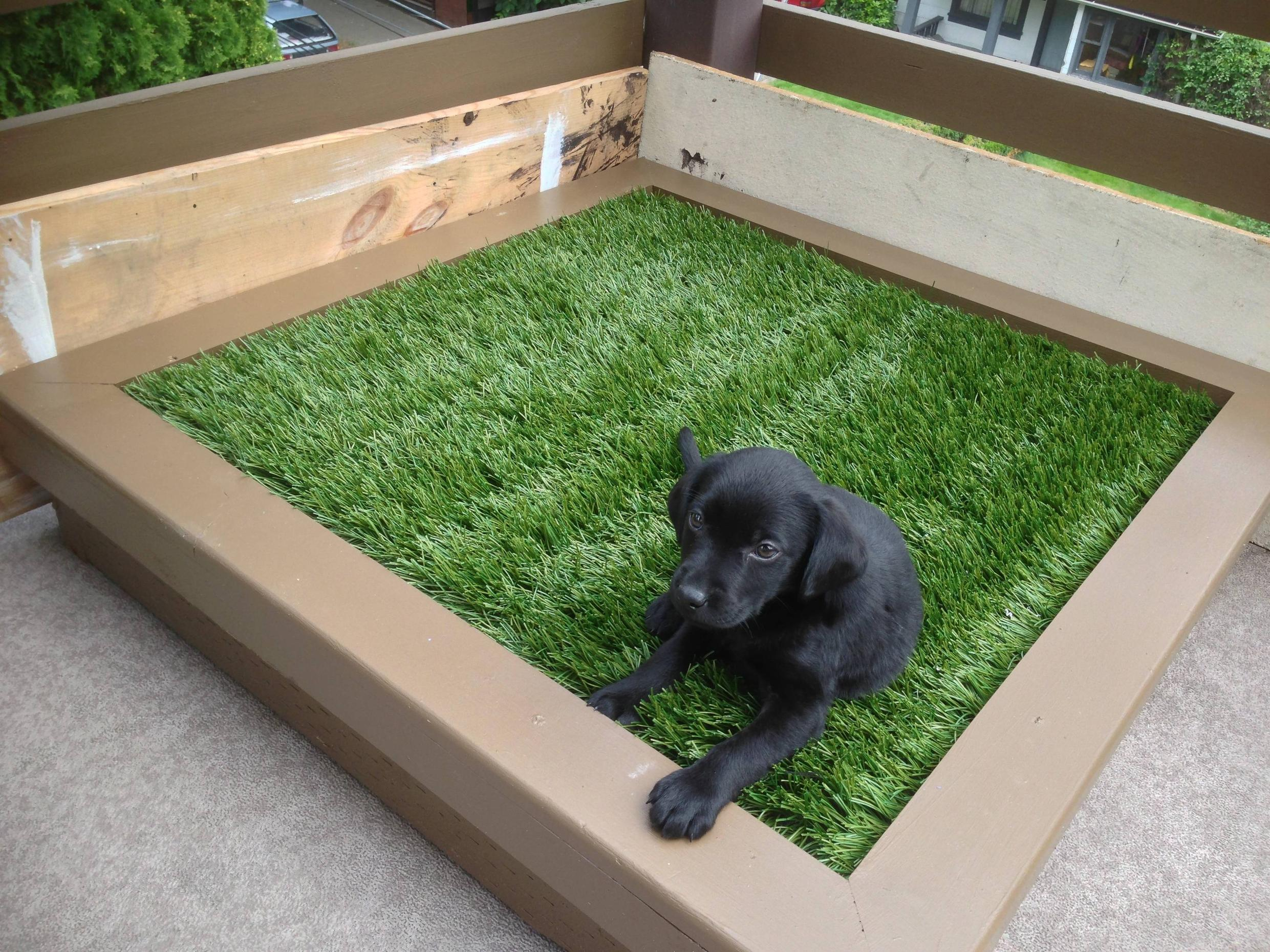 DIY Porch Potty for Dogs