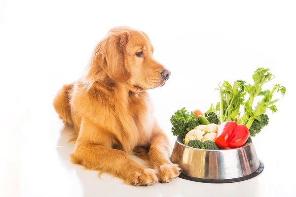 What is Malabsorption in dogs?