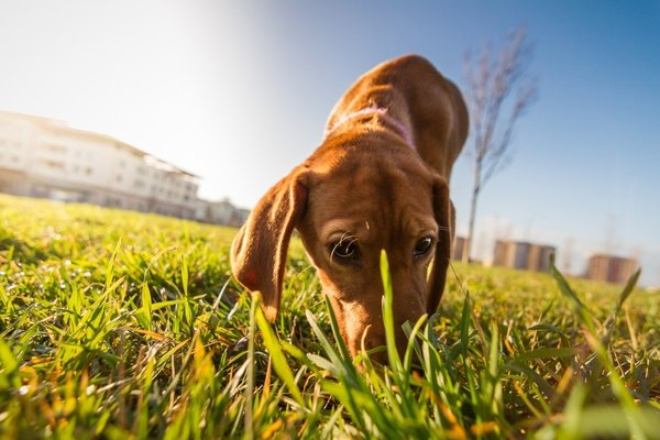 Why You Need to Discourage Stool-Eating in dogs