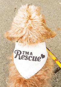 DIY Craft: Rescue Proud