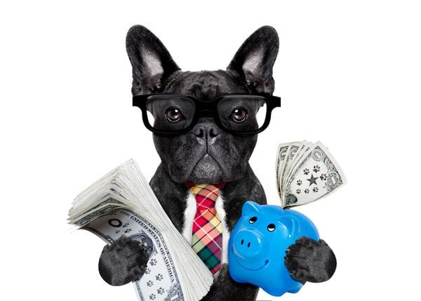 boss accountant rich french bulldog saving dollars and money with piggy bank or moneybox , with glasses and tie , isolated on white background