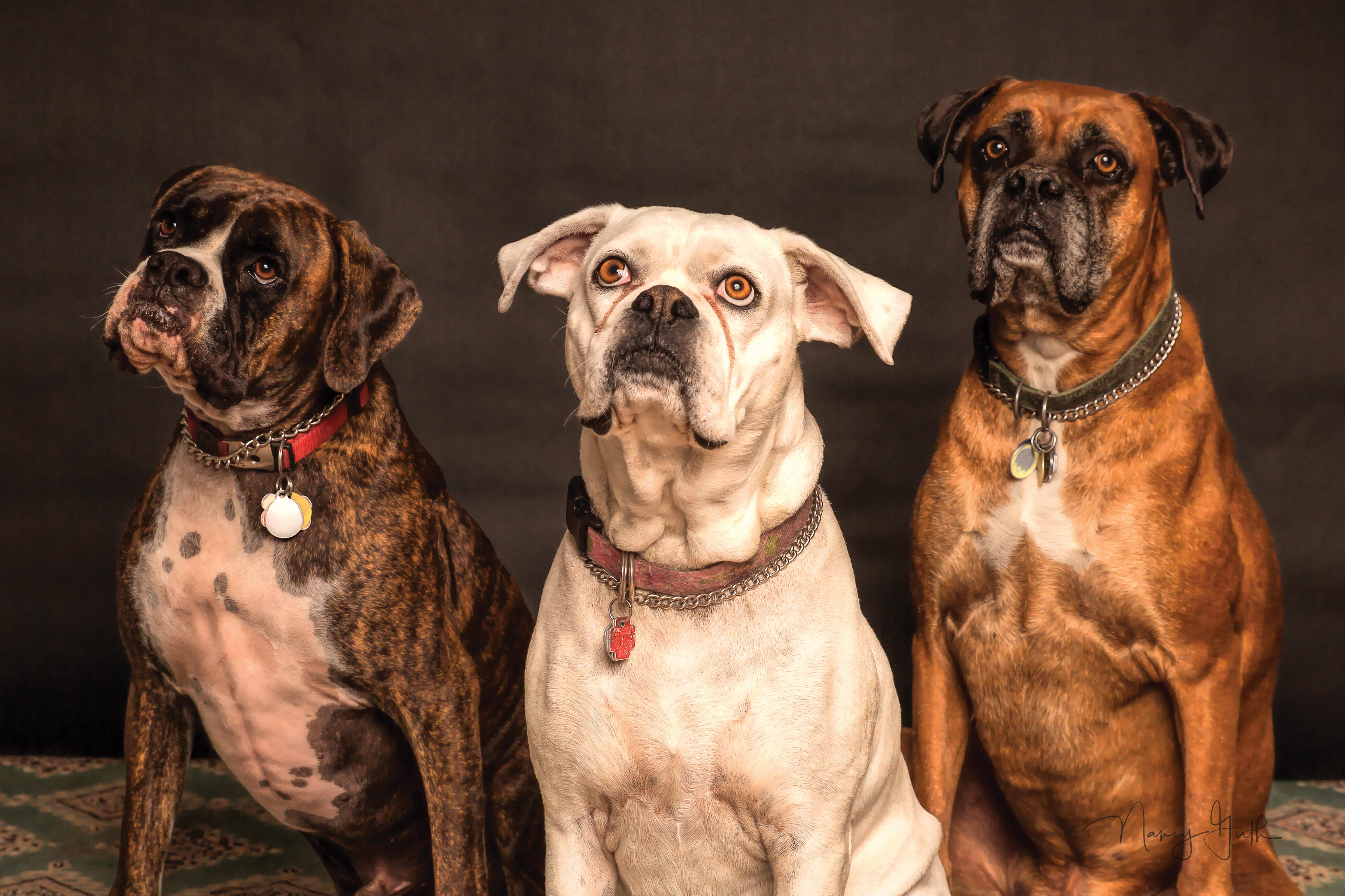 2 dogs sitting in front of a brown background