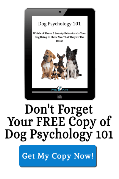 Dog Psychology 101