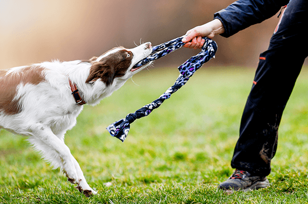 6 Epic No Sew Dog Toys - Indoor, Outdoor & Denim for Heavy Chewers