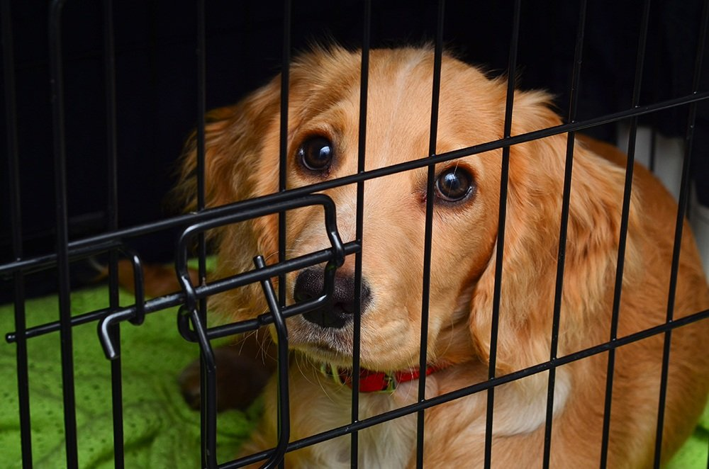 Small dog in dog crate .