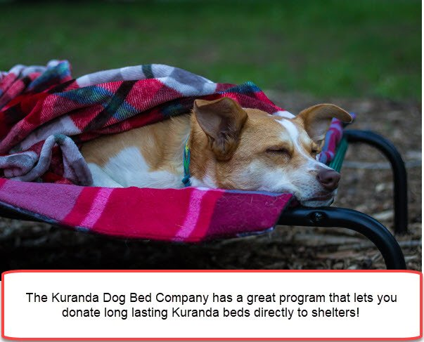 Kuranda Beds for Shelters