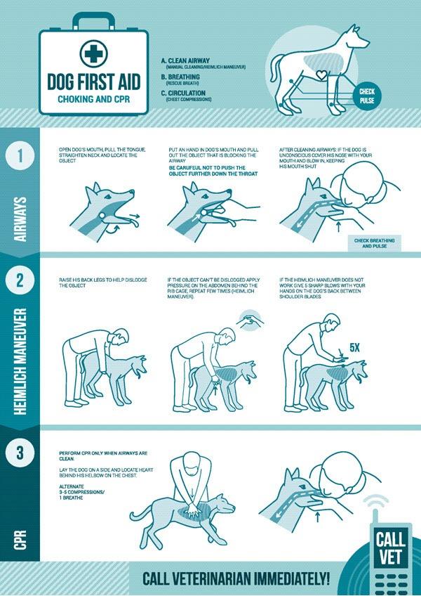 Dog First Aid - Choking