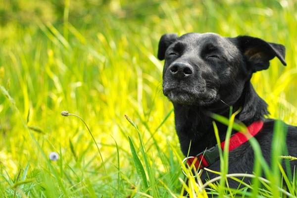 Older rescue dog