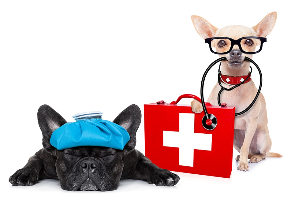 2 small dogs with first aid kit
