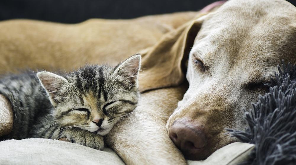 Dog and Kitten sleeping