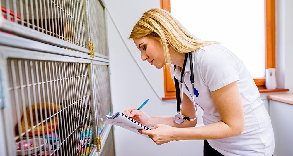Woman taking notes in a notebook outside kennel in a animal shelter