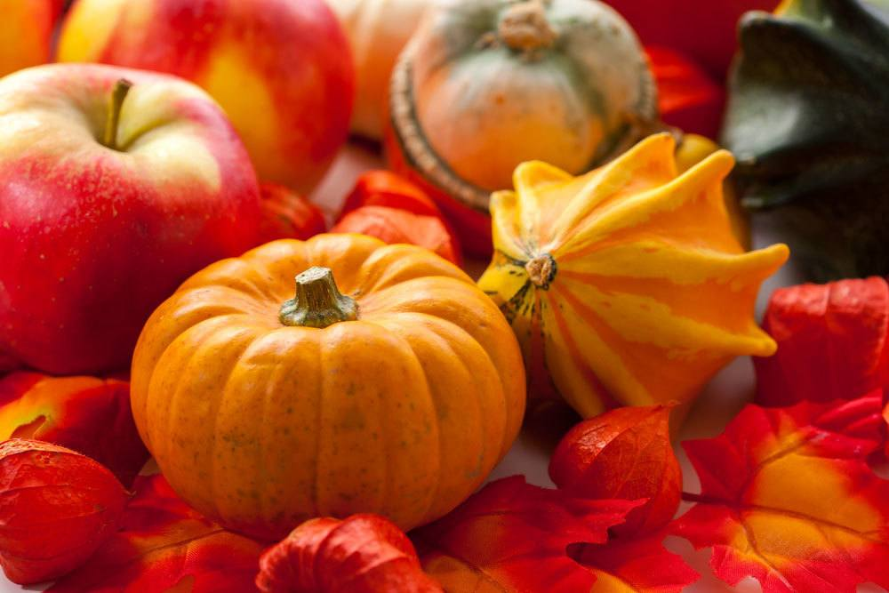 variety of pumpkins and apples sitting on fall leaves