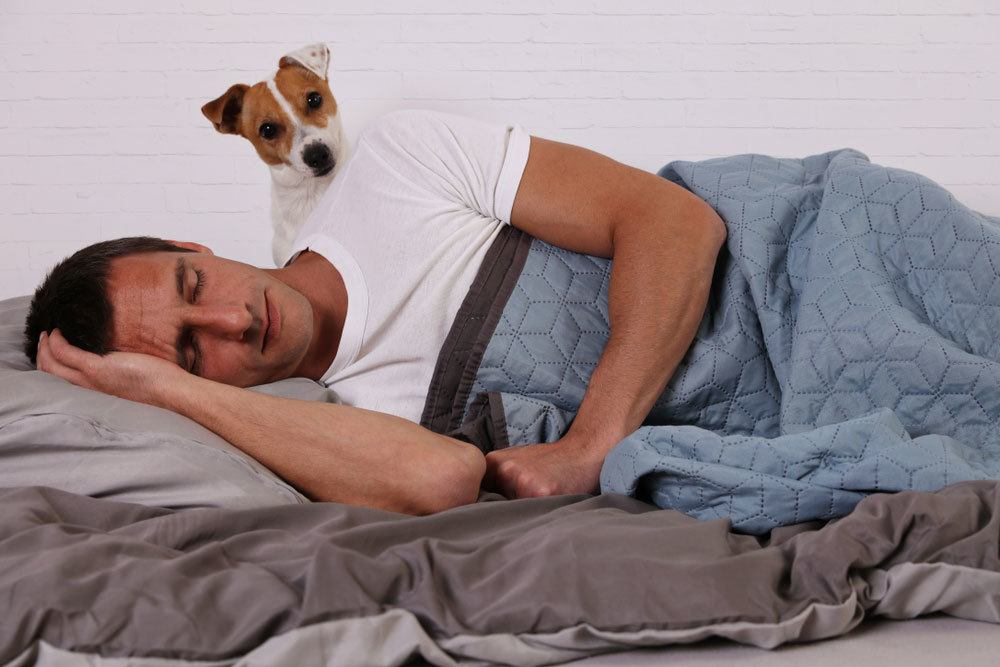 Dog looking over man's shoulder who is asleep in bed under a blanket