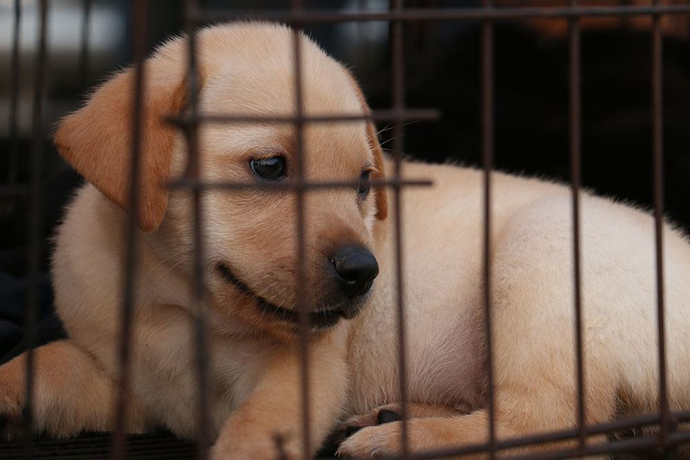 Small puppy in crate