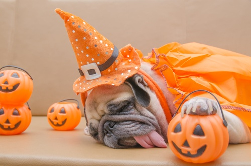 Dog with trick or treat basket