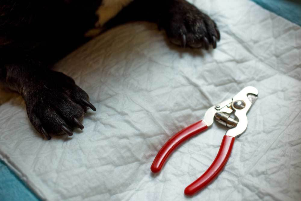 Black dog paws on mat with nail clippers
