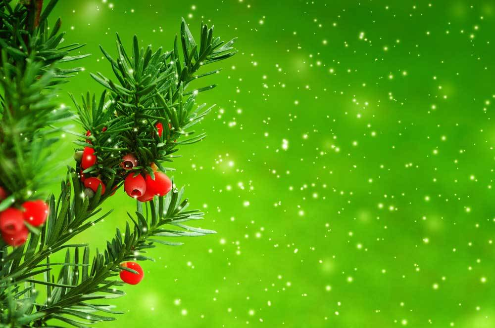 Juniper branch with red berries on snowy green background