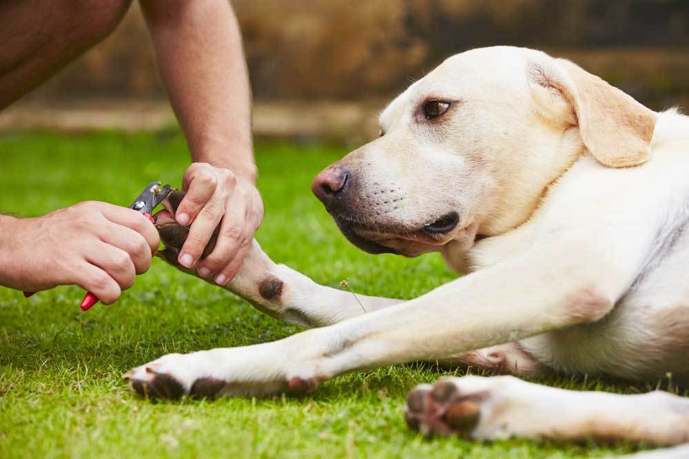Dog laying down on grass having nails clipped
