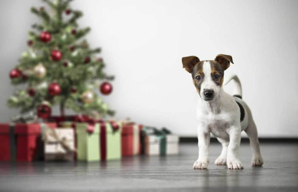 Puppy standing beside a Christmas tree surrounded by wrapped gifts