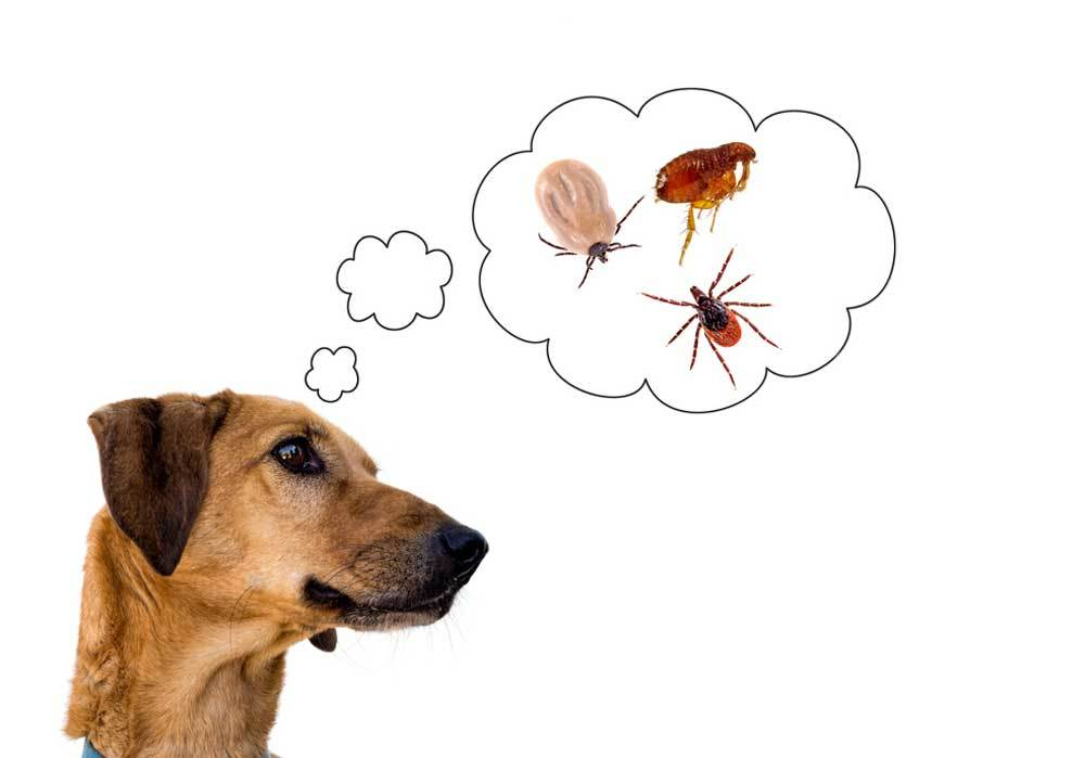 Dog with thought bubble containing flea and ticks