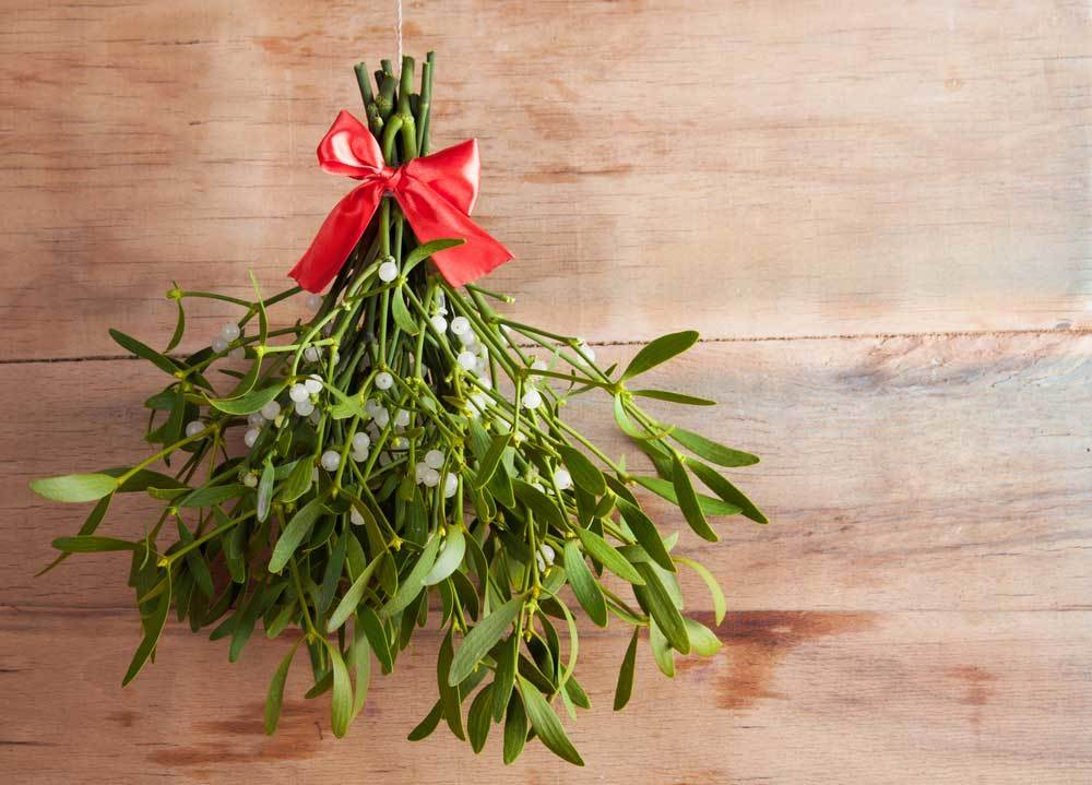 Bundle of mistletoe tied with red ribbon on wood background