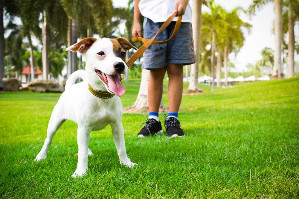 Excited puppy on a leash at park with owner