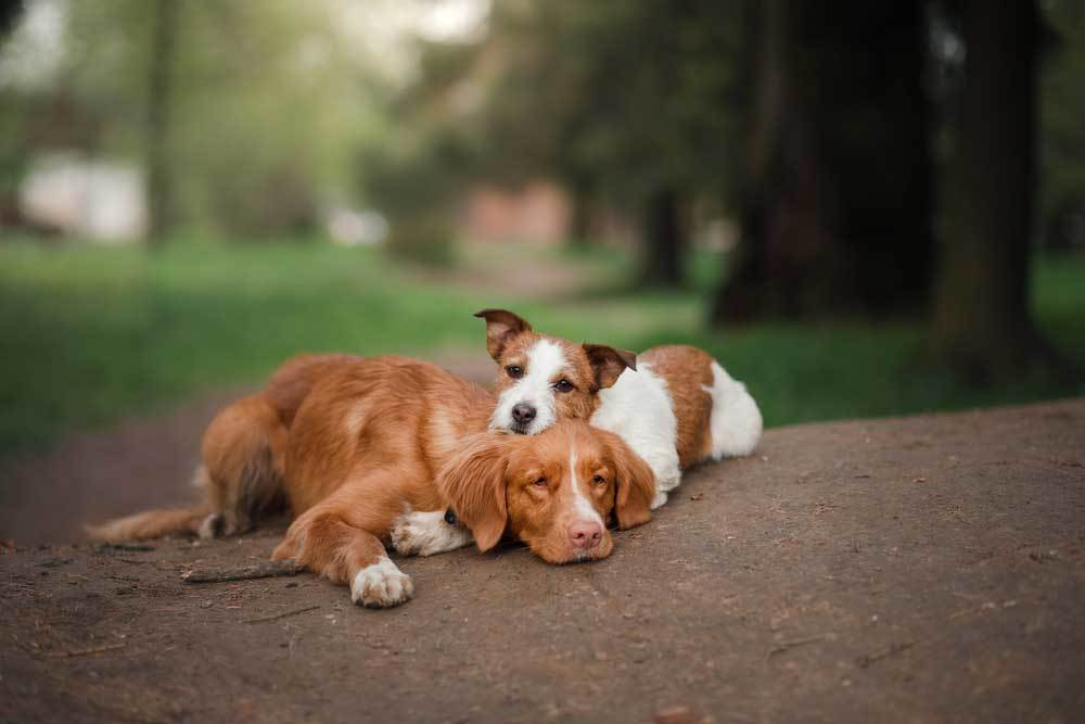 Two tired dogs laying on each other on the dirt outdoors