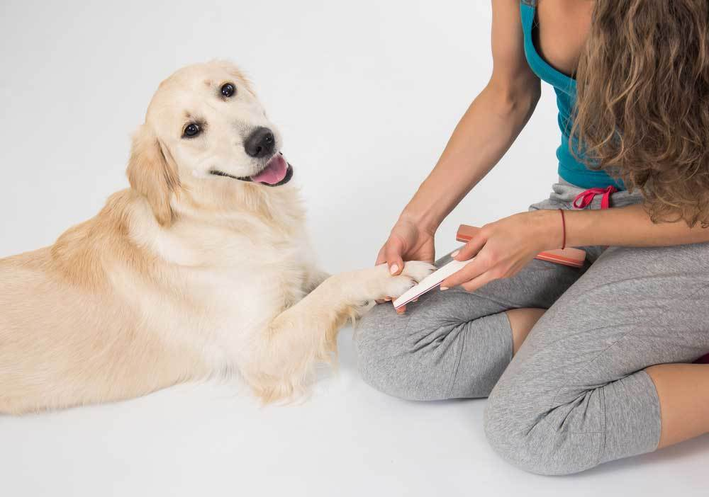 Large tan dog getting its nails filed by women in yoga clothes sitting on floor