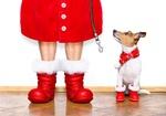 Christmas jack russell terrier