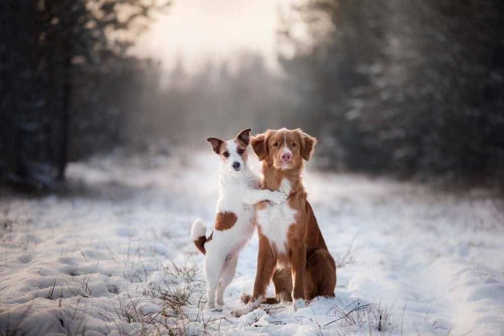 2 dogs on snow covered road. One is sitting and the other on hind legs hugging the sitting dog.