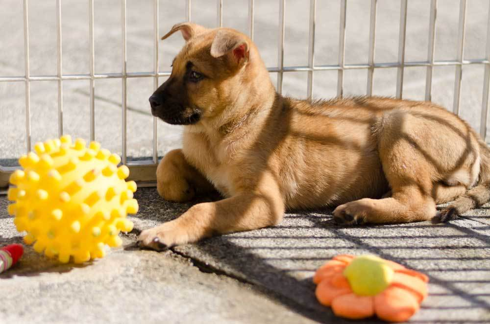 puppy outside in metal puppy playpen with toys