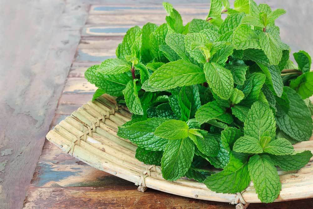 Mint leaves on a bamboo platter