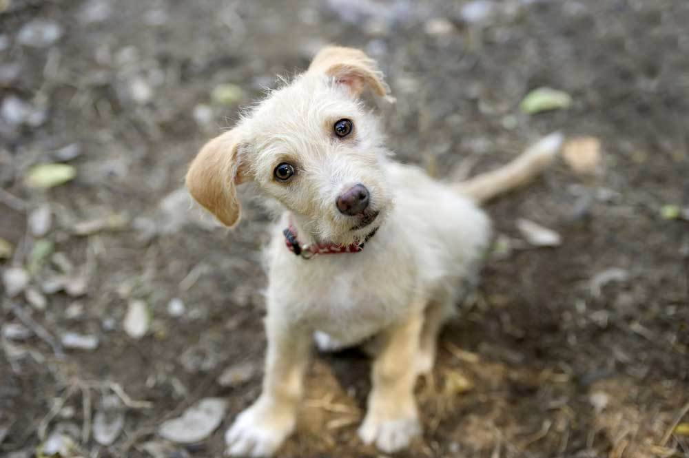 Curious puppy with head tilted sitting on dirt