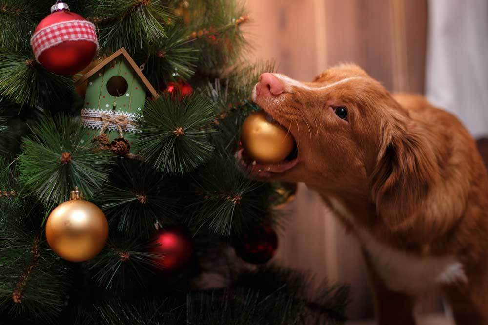 dog stealing christmas ornament from christmas tree