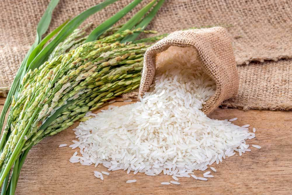 burlap sack of rice spilled onto wooden table next to stalks of rice
