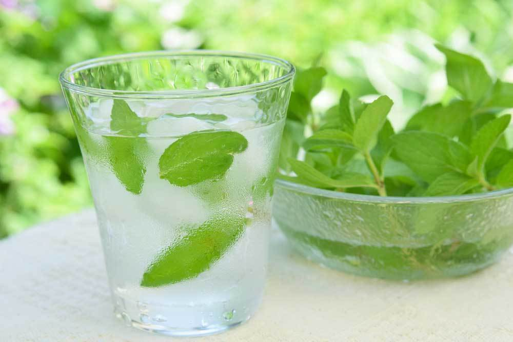 Glass of ice cold mint water next to bowl of mint