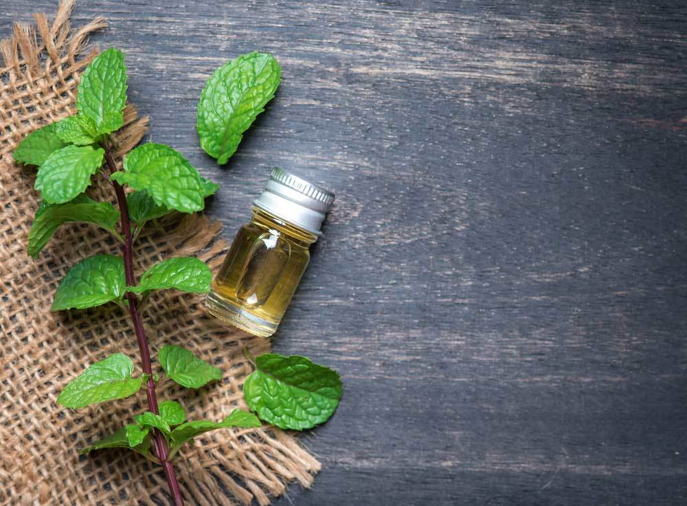 small bottle of peppermint oil on a wooden table next to a stem of peppermint on a piece of burlap