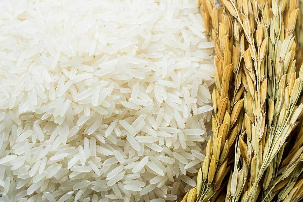 dry white rice with green stalks of rice