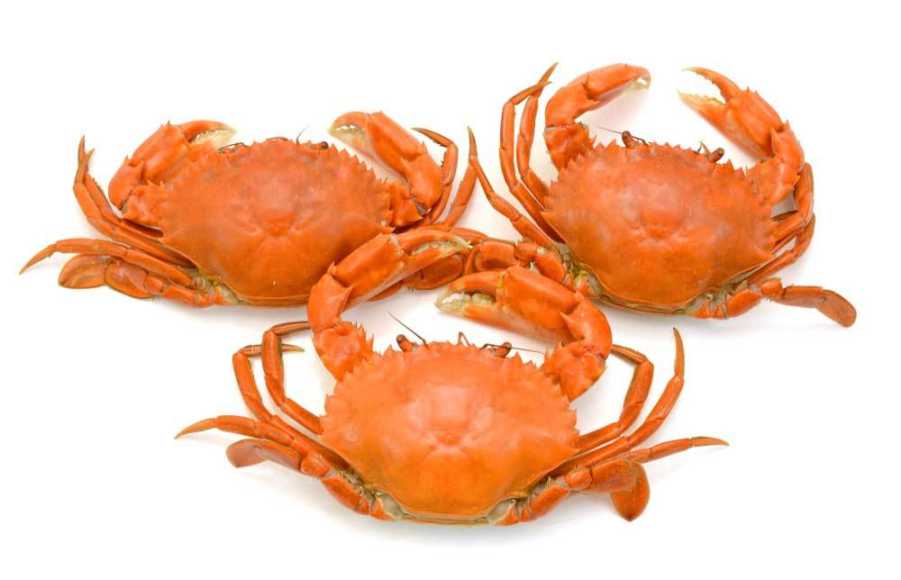 3 red crabs on white background