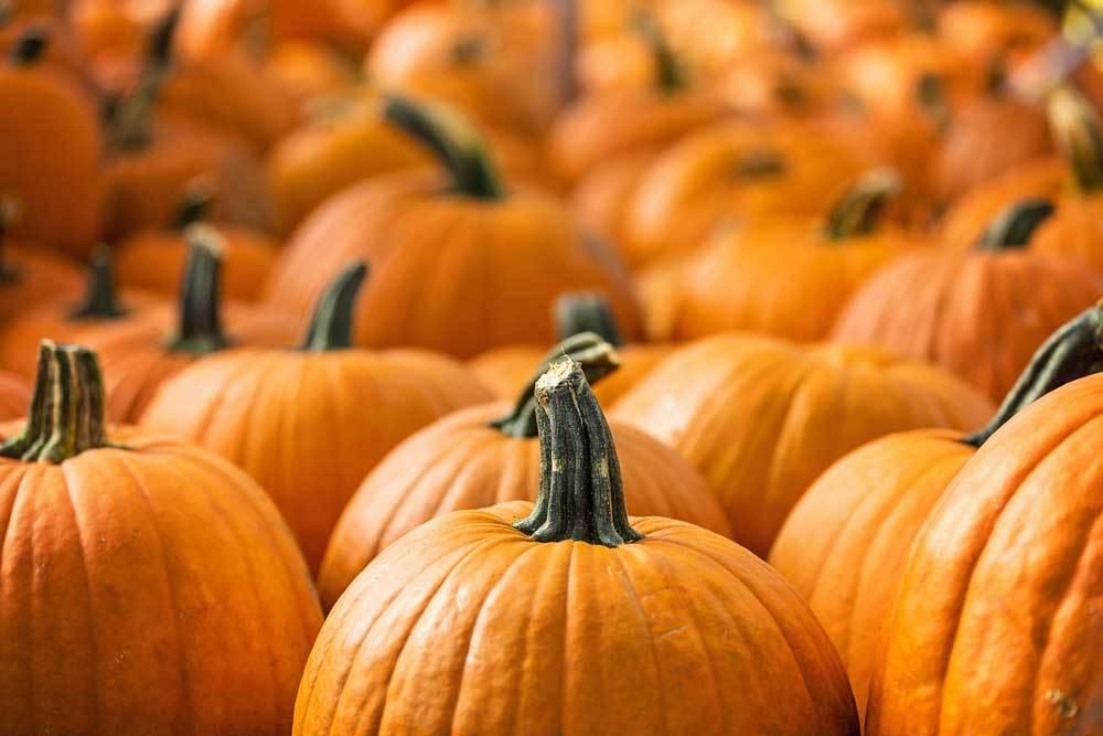 a close up of a pile of pumpkins