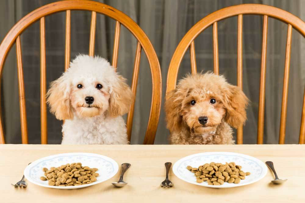 2 dogs sitting in chairs at table with plates if dof food and utensils
